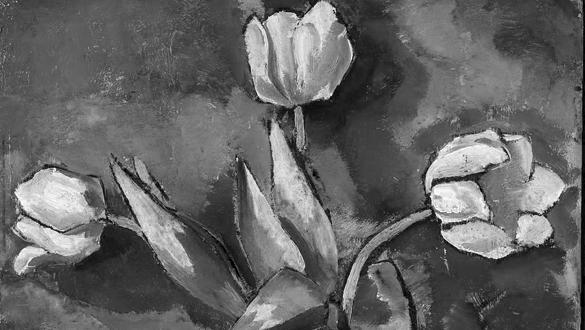 tulips bold